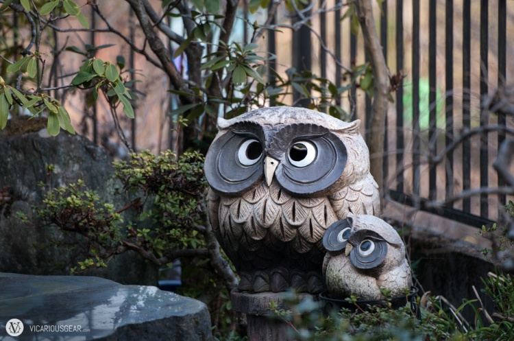 Funny looking owls spotted watching over someones yard.