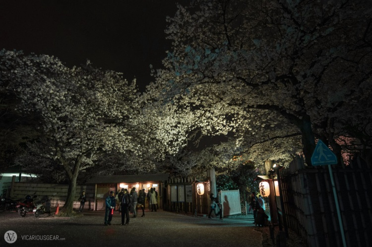 The entrance to Sankeien garden. The streets were dusted with Sakura petals.