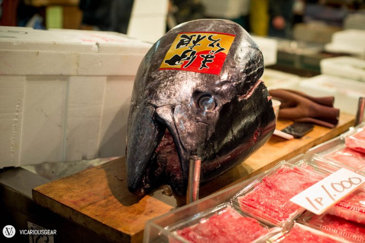 Tuna head on display
